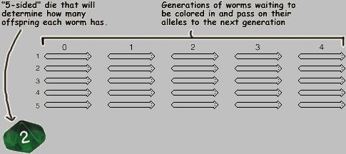 Genetic Drift Simulation