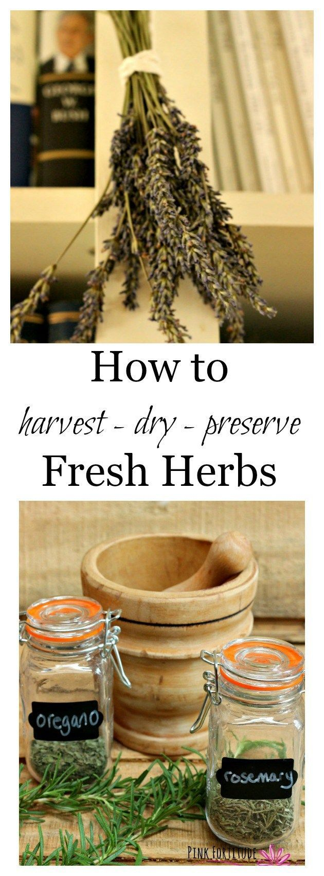 Preserved cypress bonsai 7 h contemporary phoenix by botanical - How To Harvest Dry And Preserve Fresh Herbs