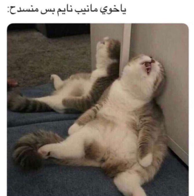 Pin By ربيع الحياة On Arabic Words Cute Funny Animals Funny Animals Cute Animals