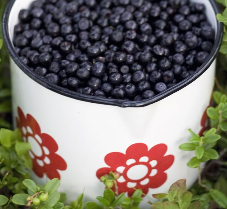 Blueberries are found allover the Finnish nature. #Finland #Nature #Blueberry #Slow #Food