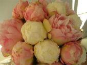 http://www.senseofstyle.nl/webwinkel/details/319/17/zijden-bloemen/pioenroos-knop