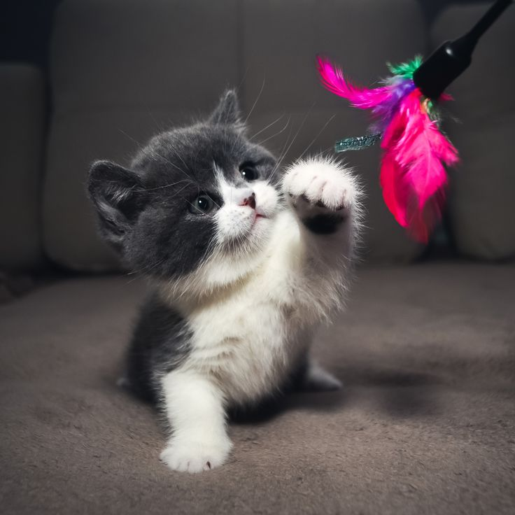 Best 25 cute cat wallpaper ideas on pinterest cat wallpaper cat playing tap to see more adorable cats wallpaper mobile9 voltagebd Gallery