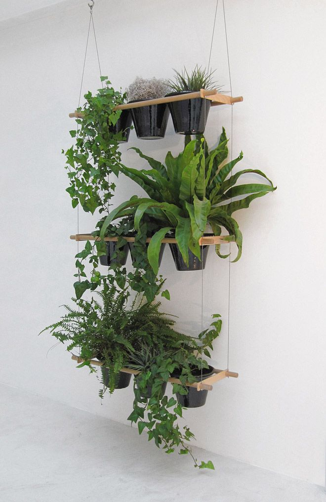 hanging indoor plants    i see it with herbs, small  winter veggies and greens growing in front of a large kitchen window .