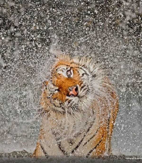 Funny pictures about National Geographic picture of the year. Oh, and cool pics about National Geographic picture of the year. Also, National Geographic picture of the year. Photographie National Geographic, National Geographic Photography, Wildlife Photography, Animal Photography, Amazing Photography, Beautiful Creatures, Animals Beautiful, Cute Animals, Funny Animals