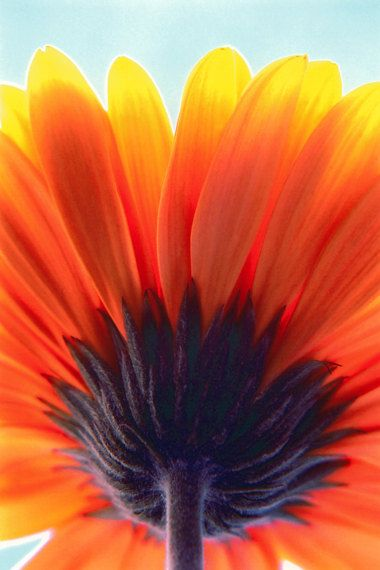 "Flower, Close-up of a sunflower, Flora serie, 8"" x 12"" Colour photography on Etsy, $20.00"