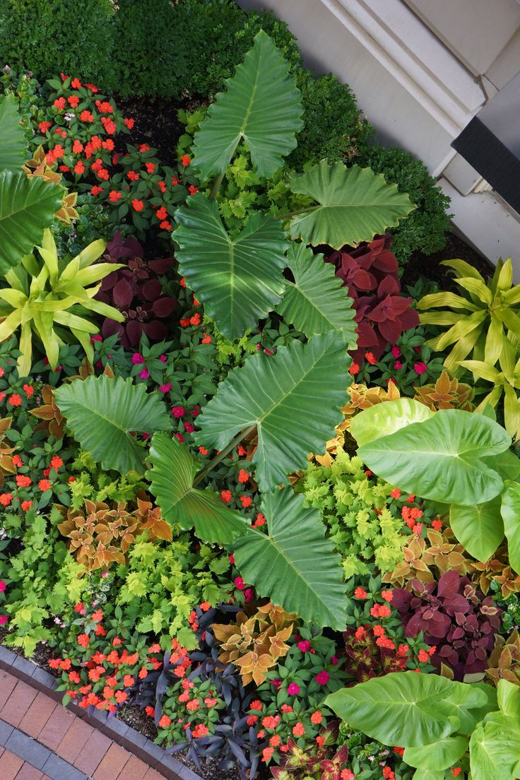 59 best annuals tropicals seasonal displays designed by for Adam woodruff garden designer