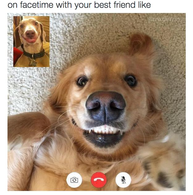 The friend you Facetime with like: | 24 Types Of Friends Every Person Will Immediately Recognize