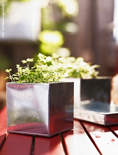 Got sun? Got water? Got a window or balcony? You've got what it takes to embrace your inner gardener.