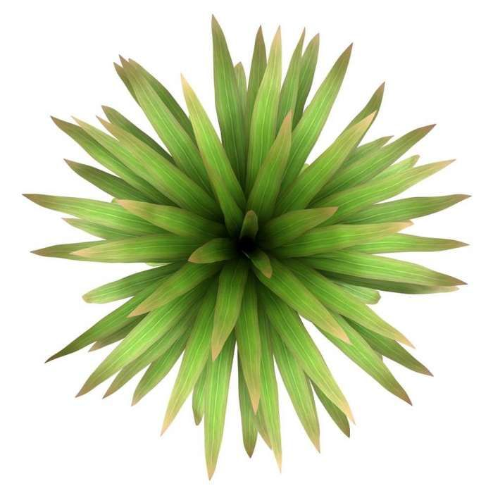 Shrub top view google search photoshop library for Plante yucca