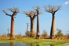 Situated on the Southeast coast of Africa, Madagascar is a large island nation comprising a wide range of beaches, reefs, landscapes, plants, animals and rainforests. It