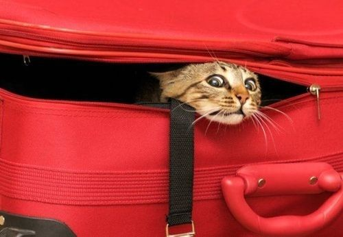 40 Cats Who Are Awful At Hide-And-Seek