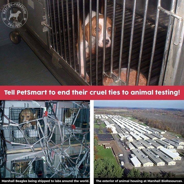 Petsmart End Your Cruel Ties To Animal Testing Petsmart Carries Marshall Pet Products A Company With Cruel Ties To Animal Testing Beagle Petsmart Animals