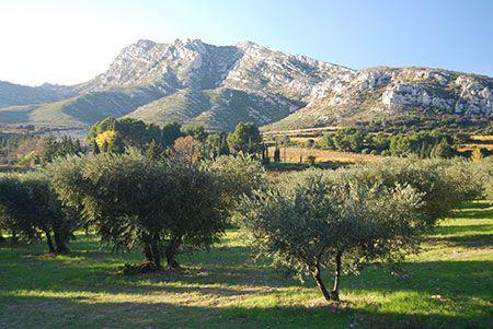 Bouches-du-Rhône :  Parc naturel régional des Alpilles