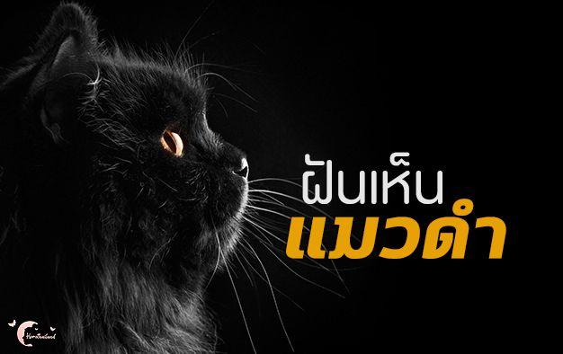 ทำนายฝ น ทำนายฝ น ฝ นเห นแมวดำ