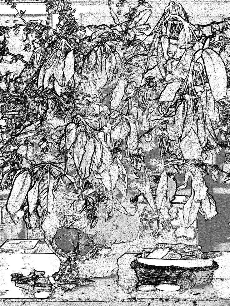 https://flic.kr/p/NTmFPB | Salvia. 2 | Elaborazione digitale.
