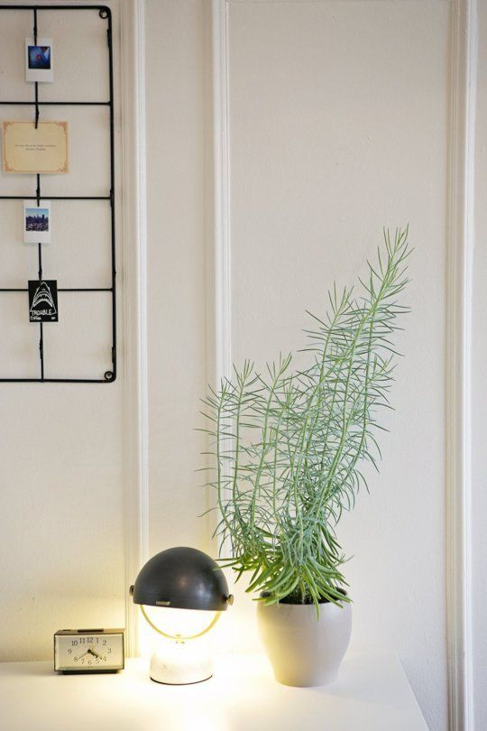 Indoor Plant Decorating Ideas | Apartment Therapy