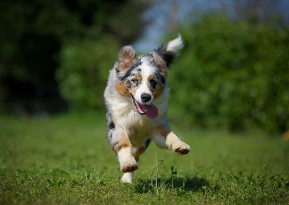 5 Most High-Energy Dog Breeds According to Vet Experts