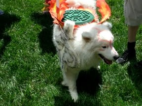 #cosplay    Check out the great article on how they made the costume!  This is a build of a cosplay costume of Amaterasu from Okami, for our dog Dante.