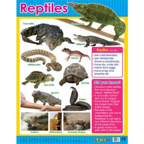 17 Best images about reptiles theme on Pinterest | Lesson ...