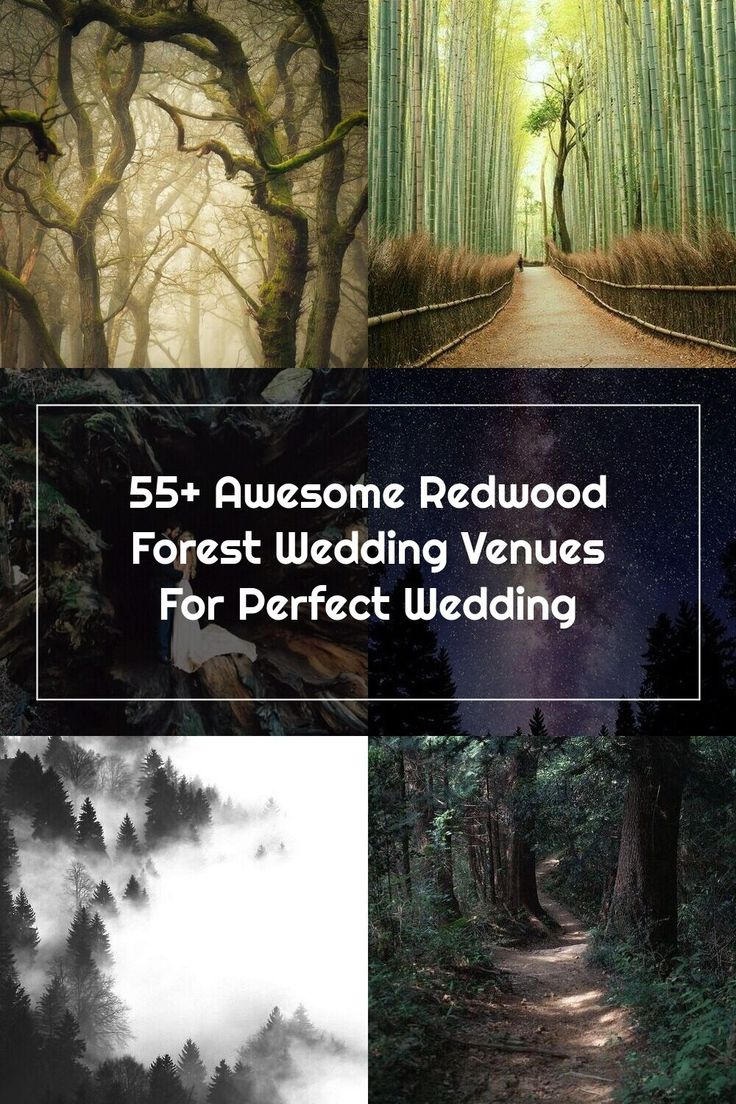 Redwood Forest California Wedding Venues 4 in 2020 ...