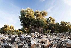 From my point of view ITALIAN OUTBACK by Marika Ramunno #weareinpuglia #photography #photo #fotografia #MakyR