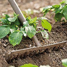 www.rustica.fr - Butter pour avoir une bonne récolte - Râteau
