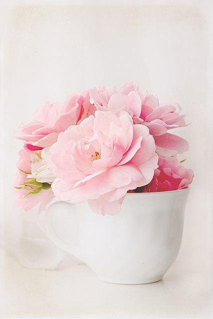 ...: White Flowers, Pink Flowers, Flowers In Teacups, Teas Cups, Flowers In A Teacups, Ana Rosa, Pink Rose, Bloom Pink, Flowers Cups