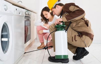 So it is important that you get it treated as soon as possible. In our domestic pest control service, we inspect, treat and then also let you know the way you can prevent it to reoccur.
