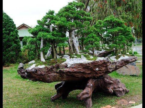 Fascination    of   bonsai    trees   2017
