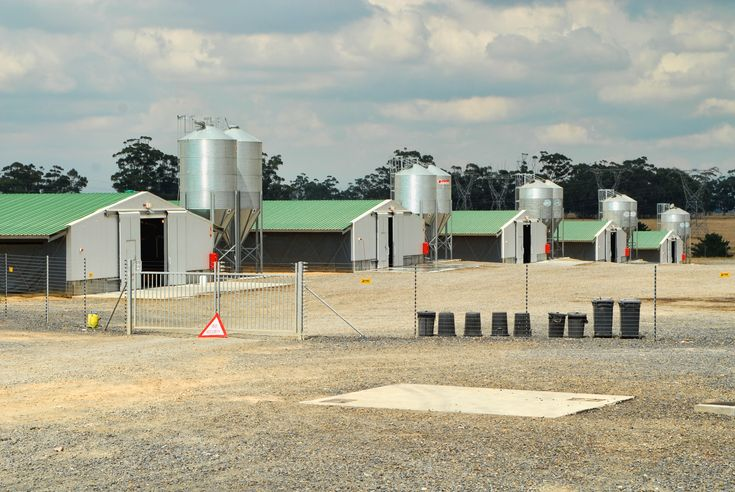 commercial poultry house pictures   Broiler houses Broiler houses, also known as an open house: earth ...