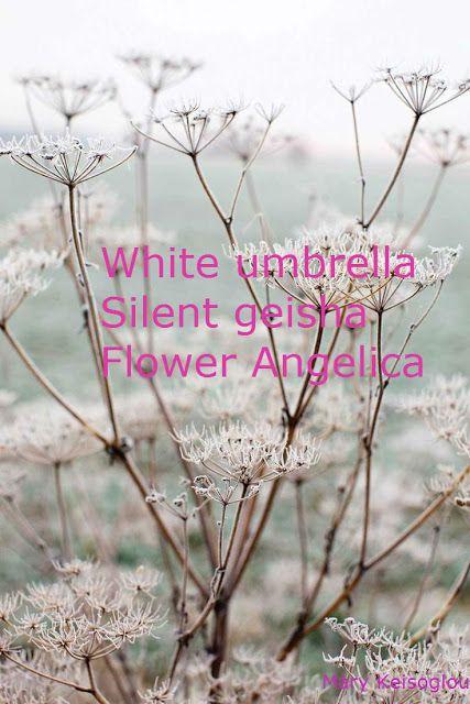 Photo-lyrics: Angelica