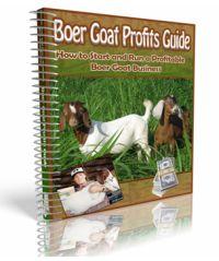 Raising Goats   Raising Boer Goats