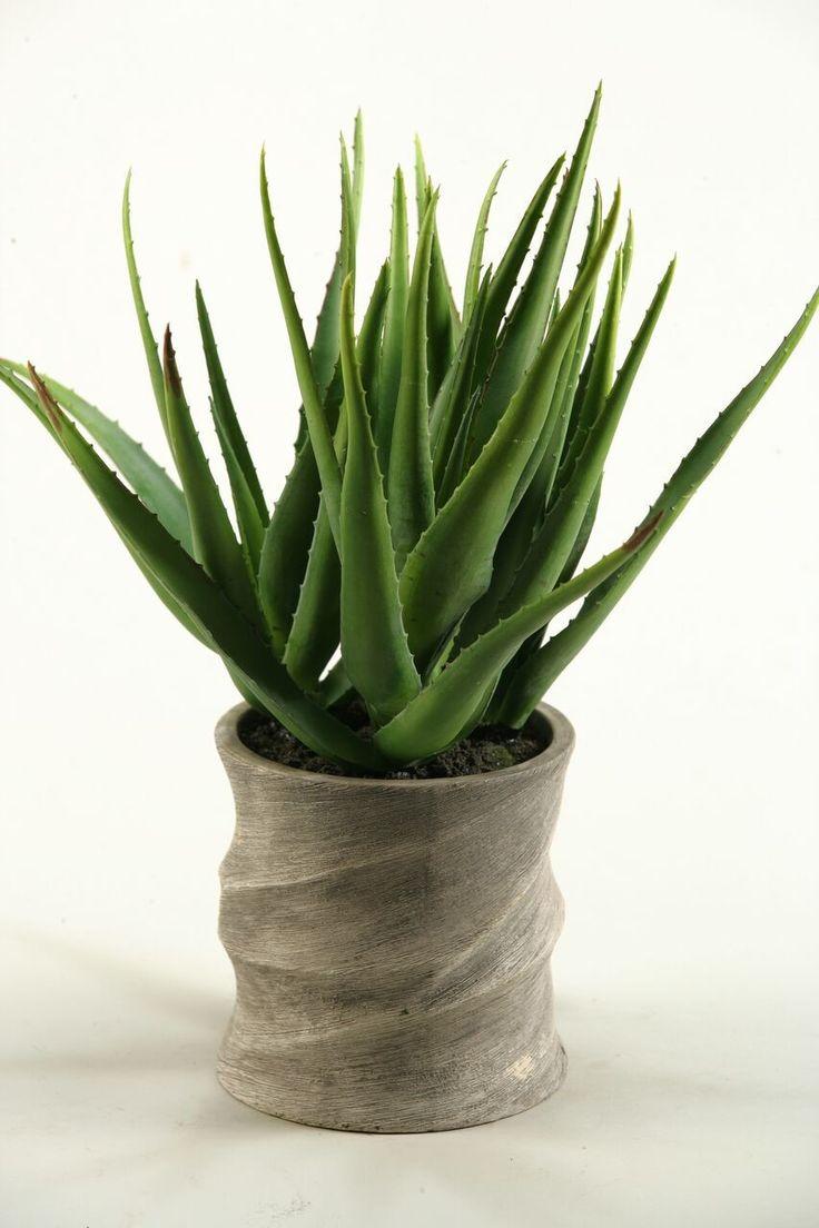 Silks pothos desk top plant in pot amp reviews wayfair - Aloe Vera Desk Top Plant In Planter