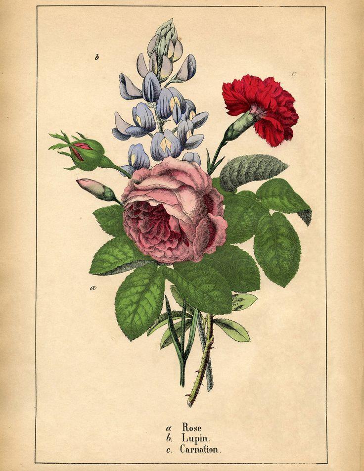 Antique Botanical Flowers Printable via @Karen Jacot - The Graphics Fairy