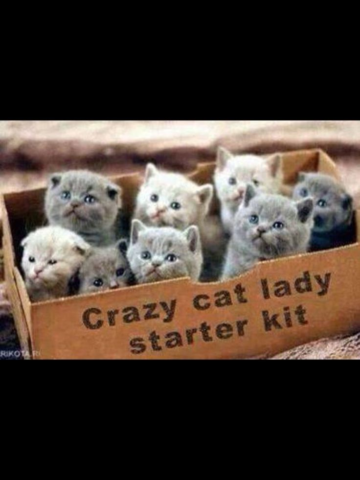 The gift for the lady who has everything lol #kittens