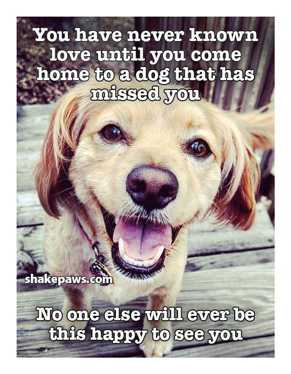 Quotes Love Best Friends Dogs Happiness Missing You With