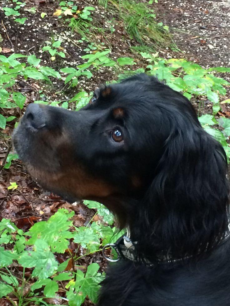 27 besten Nähen für Hunde Bilder auf Pinterest   Hund zubehör ...