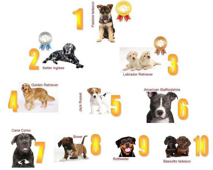 Cani di razza che passione: crescono anche in tempi di crisi le registrazioni Enci :http://www.qualazampa.news/2016/04/26/cani-di-razza-che-passione-crescono-anche-in-tempi-di-crisi-le-registrazioni-enci/