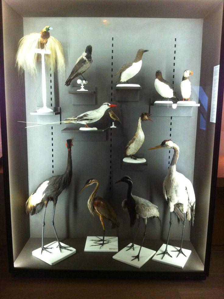 museum Langres