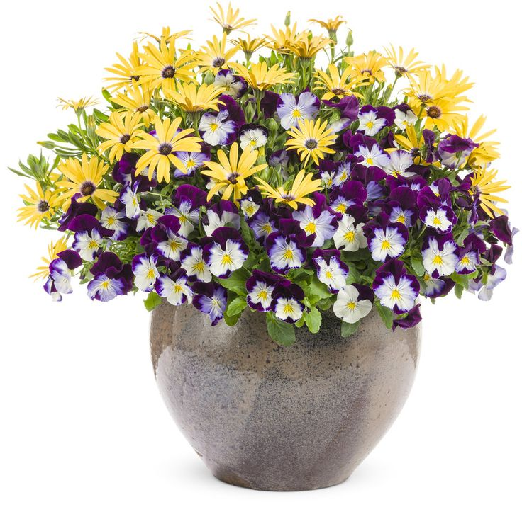 """Comfort Zone 