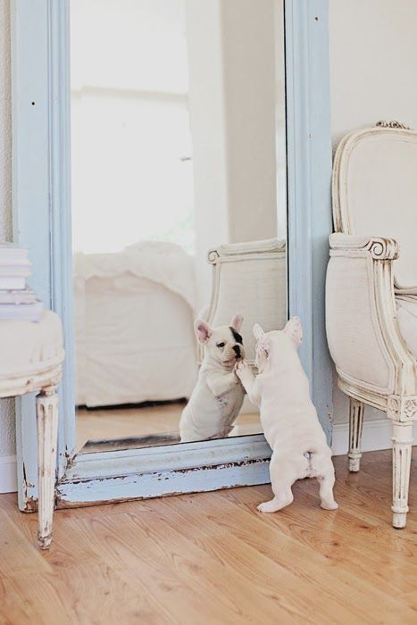 Dreamy Whites: We Moved, Lilacs, French Bulldogs