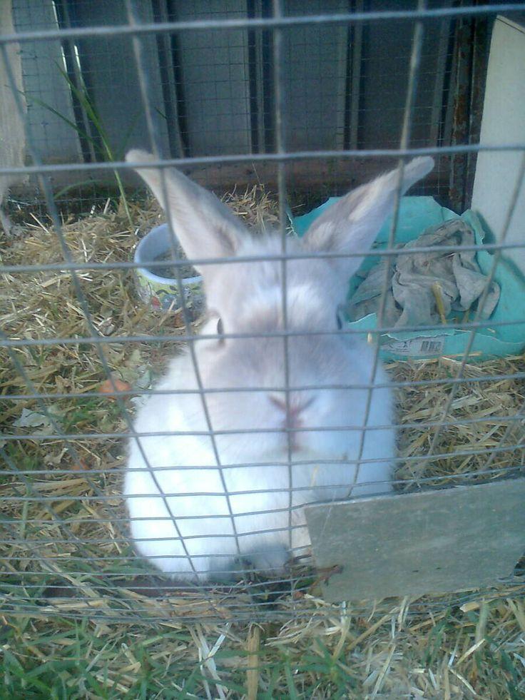My rabbit Stuart