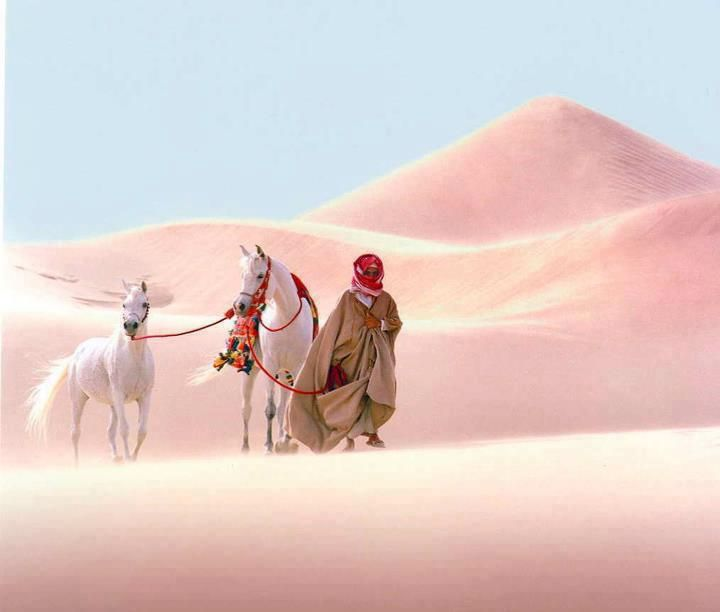 desert culture