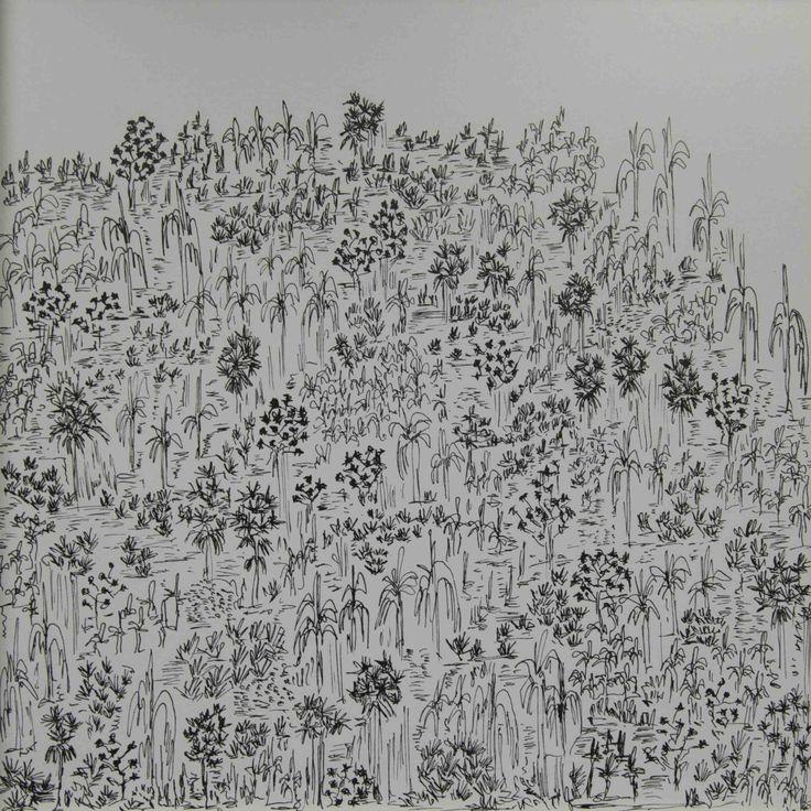 dibujando selva