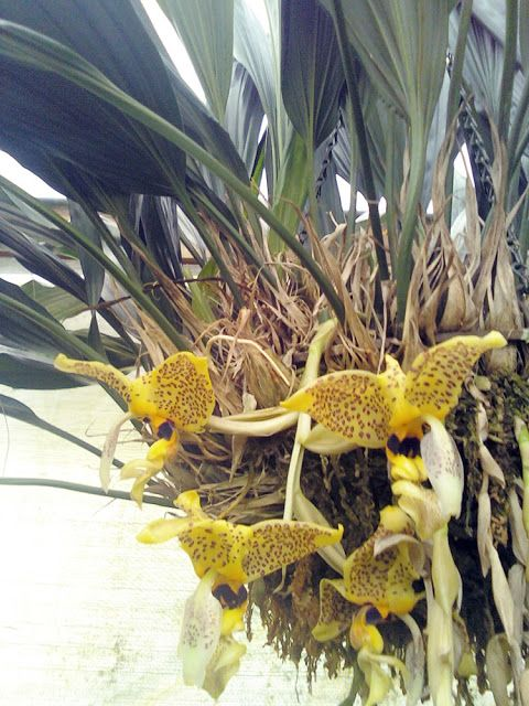 unusual trees | The Rainforest Garden: Extremely Unusual Plants at the Orchtoberfest