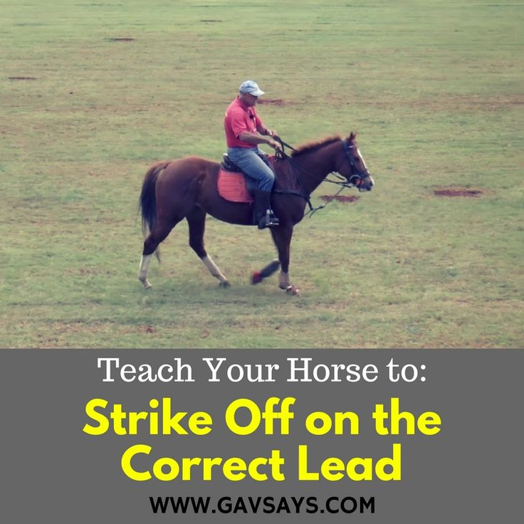 GavSays.com: Learn how to teach your horse to Strike off on the Correct Lead.