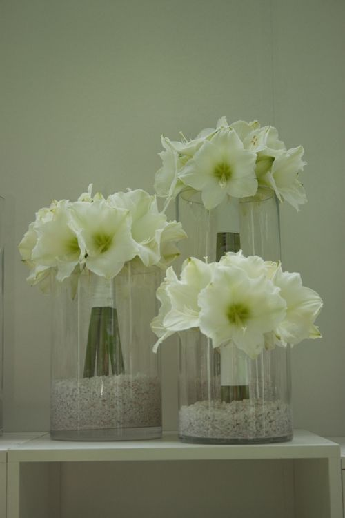 14 best images about what to do with amaryllis on pinterest flowers marriage and bridal bouquets. Black Bedroom Furniture Sets. Home Design Ideas