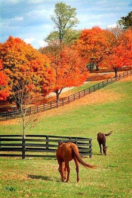 Thoroughbreds on a Kentucky Horse Farm
