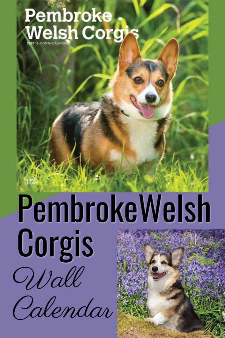 Pembroke Welsh Corgis Corgi Corgi Breeds Pembroke Welsh