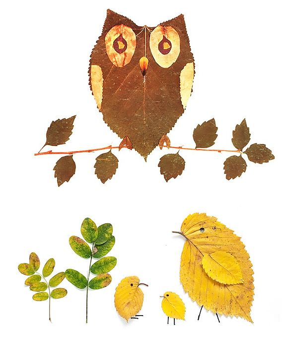 DIY Leaf Crafts for Kids   Great for winter and helps children to look closely at different types of leaves and biodiversity in plants.